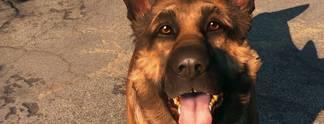 Fallout 4: S��e Hundebilder, die wir euch nicht vorenthalten wollen