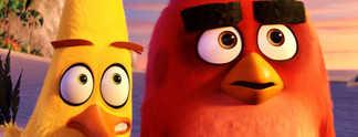 """Wütende Vögel und grüne Schweine: Das erste Video zum """"Angry Birds""""-Film"""
