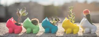 Pokémon: Diese Bisasam sind Blumentöpfe