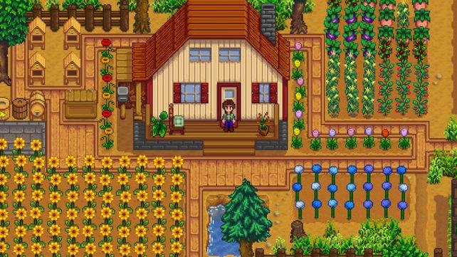 Sonnenblumen als Feldfrüchte bringen euch erst im Herbst den größten Ertrag ein.