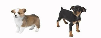 Nintendogs: Zehn Jahre später leben die Hunde noch