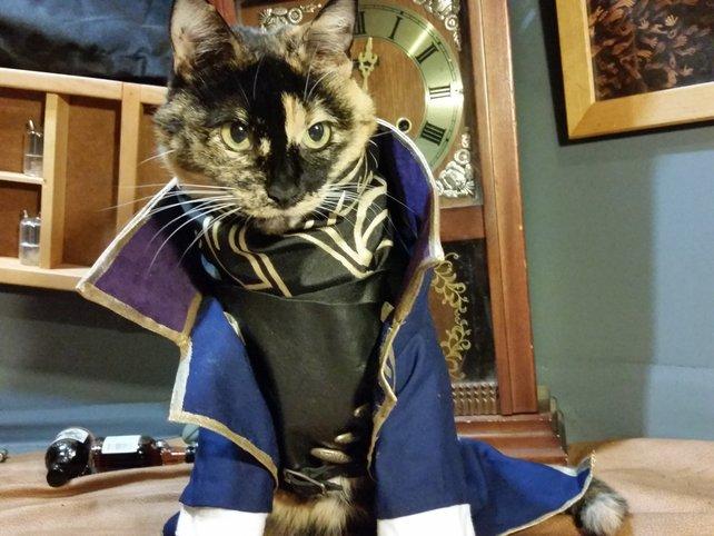 Cat-Cosplay beweist: Auch Katzen können von Emily nicht genug bekommen.