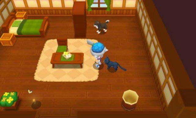 In eurer Wohnung fühlen sich Haustiere pudelwohl.