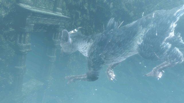 Glaubt man dem ersten Video, werdet ihr mit Trico auch Unterwasser Abenteuer erleben.