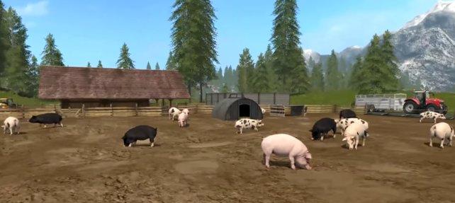Für erfolgreiche Schweinebauern gibt es auch eine Trophäe.
