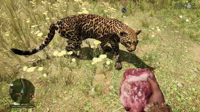Mit der passenden Fertigkeit werden Wildtiere zu treuen Gefährten.