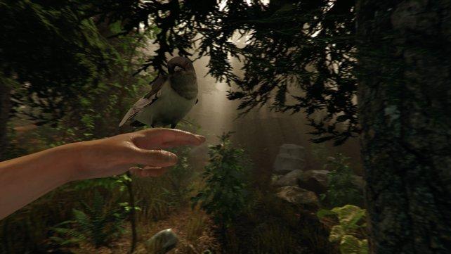 Einen solch harmonischen Moment mit einem Piepmatz gibt es in The Forest nicht oft.