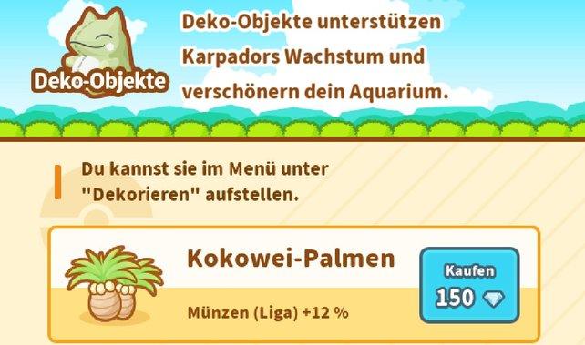 Die Kokowei-Palmen erhalten von uns eine Empfehlung.