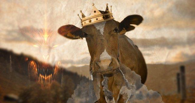 Legt ihr euch mit dem König der Kühe an?