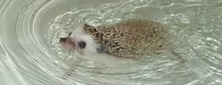 Wahr oder falsch? #190: Kann Sonic aufgrund eines Irrtums nicht schwimmen?
