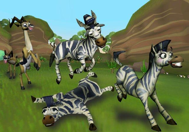 Die Zebras sind die ersten Tiere, mit denen ihr euch anfreundet.