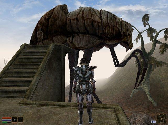 Schnellreise-Funktion? Fehlanzeige. Wer reisen will, nutzt diese Insekten. Man nennt sie Silt-Strider.
