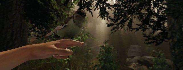 The Forest: Neues Video zum kommenden Horrorspiel für PC und Oculus Rift