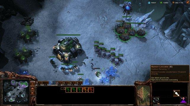 Mit dem Schwarmwirt werfen Zerg defensiven Gegnern praktisch endlose Wellen an Einheiten entgegen.
