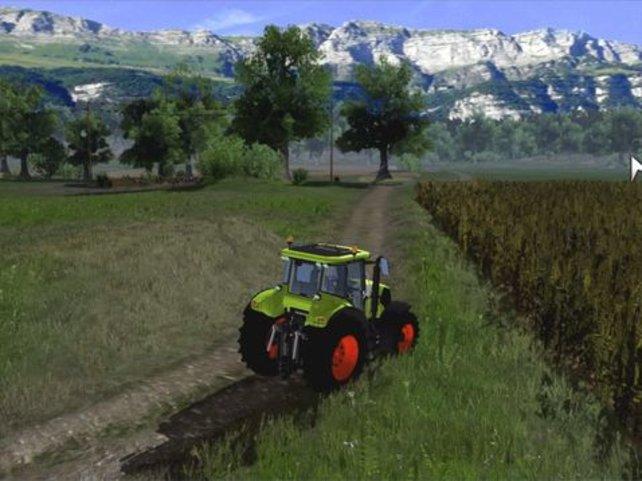 Das Feld rechts ist zur Ernte bereit, da das Getreide schon sehr hoch gewachsen ist.