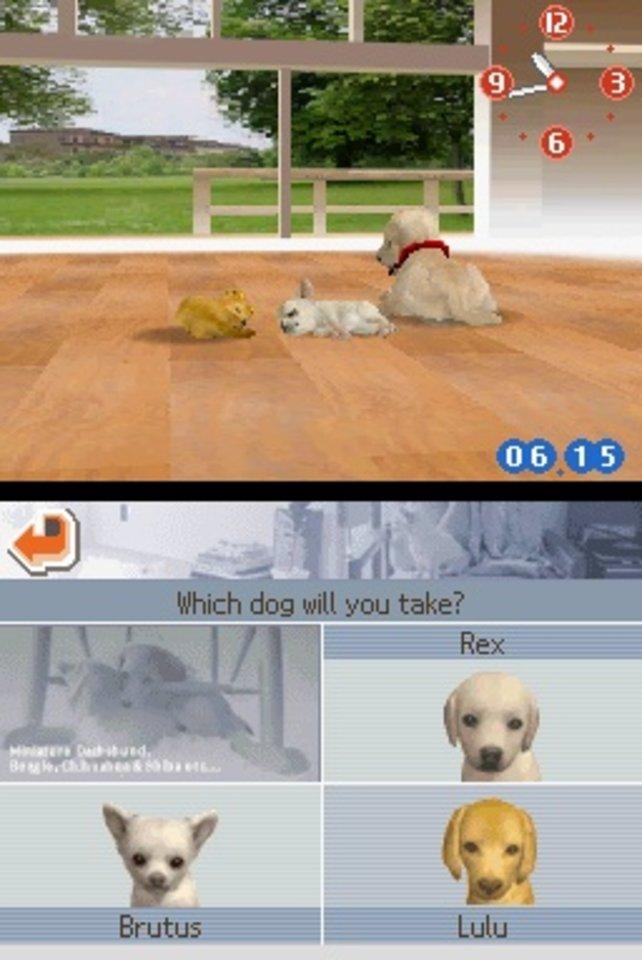 Tja, für welchen Hund entscheidet ihr euch? Rex, Brutus oder Lulu?