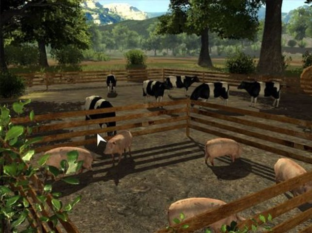 Schweine, Kühe und andere Tiere gilt es zu pflegen.