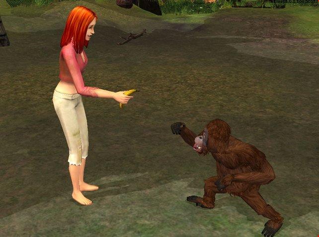Mit Bananen freundet ihr euch vorsichtig mit den Orang Utans an