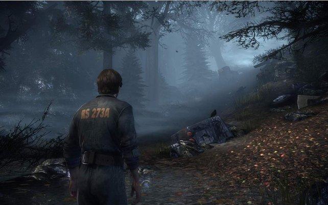 In diesem Wald möchtet ihr vermutlich kein Picknick veranstalten.