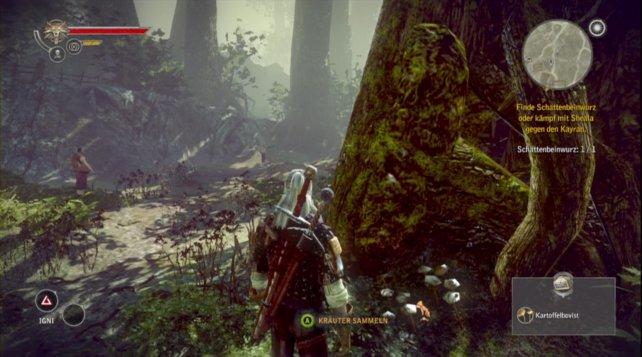 Im Wald findet ihr jede Menge nützlicher Kräuter.