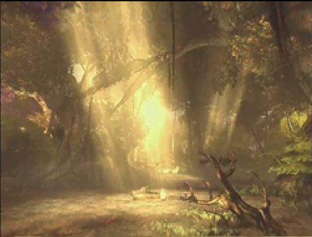 Eindrucksvolles Lichtspiel im Wald
