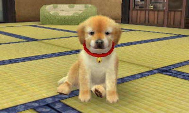 Gestatten, mein Name ist Chuck und ich bin der süßeste virtuelle Hund.