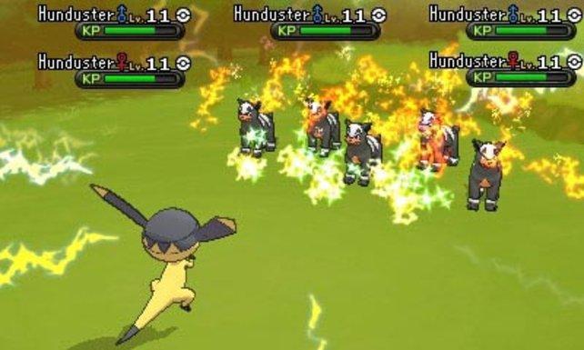 Bis zu fünf Pokémon tauchen in der Wildnis gleichzeitig auf und wollen bekämpft werden.