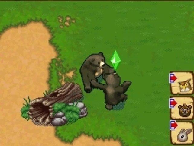 Wenn sich Bären so glücklich sind, habt ihr ihnen einen angemessenen Lebensraum geschaffen.