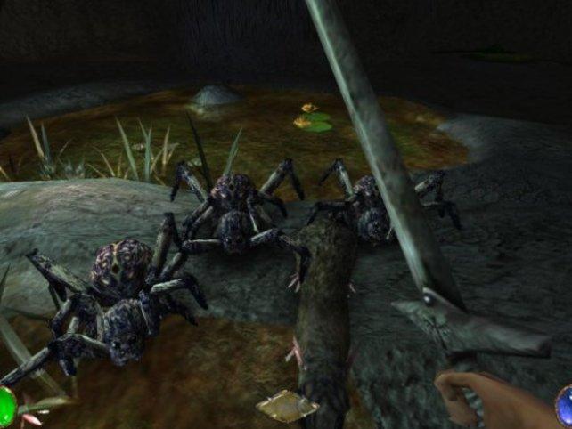 Der Angriff der Riesenspinnen