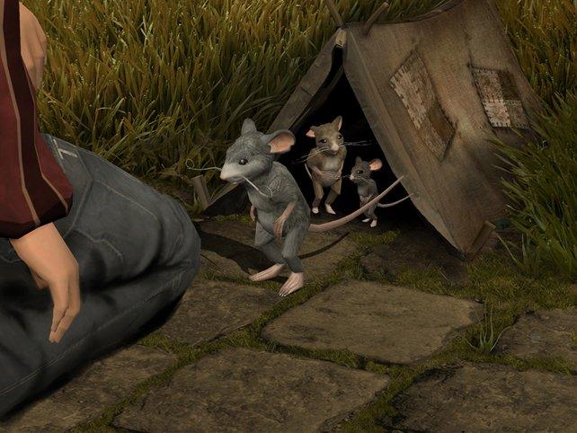 Die größten Feinschmecker in Tallen: Verquasselte Ratten.