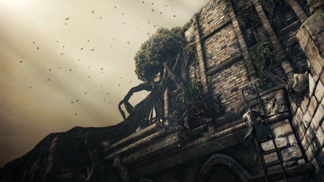 Solch verträumte Landschaften sind keine Seltenheit in Dark Souls.