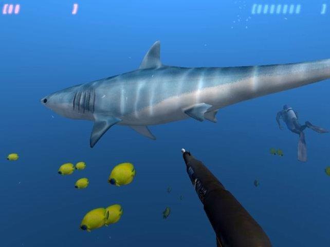 Viele Gefahren: Große Haie...