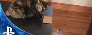 Catlateral Damage: Spielt als fiese Katze