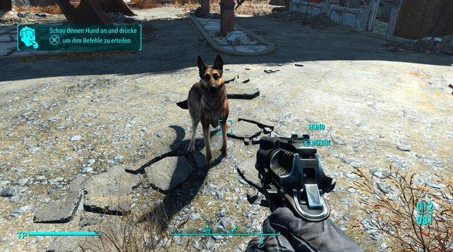 Richtet ihr dem Hund euren Blick zu, könnt ihr ihm Befehle erteilen.