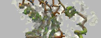Foldit: Spieler entdecken Protein, das gegen Alzheimer helfen kann