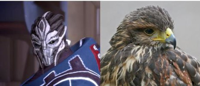 Turianer haben Ähnlichkeit mit Greifvögeln.