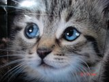 KittyCat111