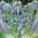 dragonquestzocker777
