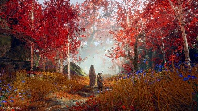 """Ungewohnte Idylle: Der spielbare Abschnitt endet in einer für """"God of War""""-Verhältnisse außergewöhnlich romantisch anmutenden Szenerie. Fraglich, wie lange der Wald so zauberhaft bleibt."""