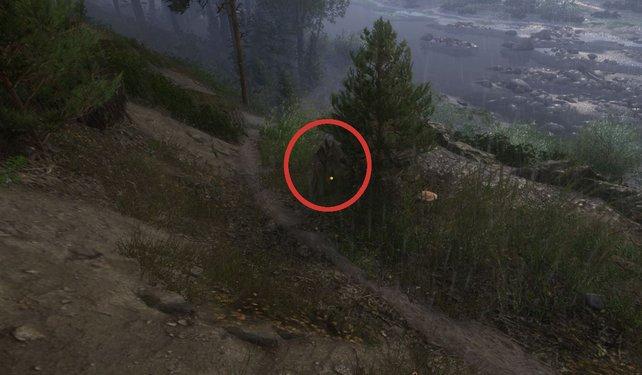 Etwas versteckt, findet ihr den Schatz in diesem Baumstumpf.