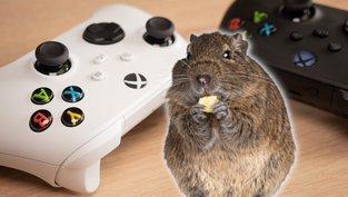 Xbox rettet Haustier
