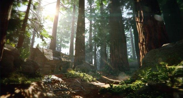 Vorteile der Evolution: Wie ein Affe, könnt ihr in Redwood von Baum zu Baum hechten.