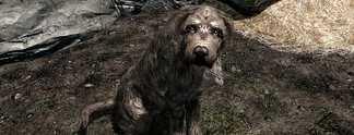 Skyrim: Spieler geht durch die Hölle, um Hund zu adoptieren
