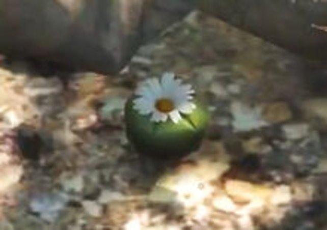 So sieht die vermeintlich harmlose Kaktuspflanze aus