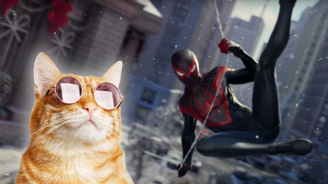 Spider-Cat wird euch in Spider-Man: Miles Morales unterstützen. (Quelle: Getty Images, Mark_KA)