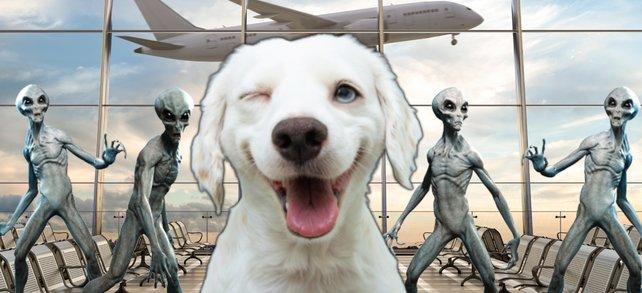 Was haben ein Hunde, Aliens und Flughafen miteinander am Hut? Ein Steam-Spiel hat die Antwort. (Bildquellen: Getty Images / dmitriymoroz, smrm1977, Warpaintcobra)