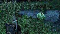 New World: Blütenkappenwedel finden und Tränke brauen