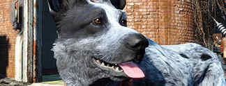 Fallout 4: Modder baut eigenen Hund ins Spiel