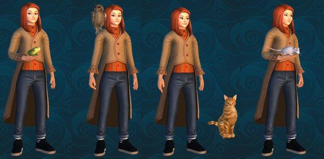 Welches Haustier wird euer neuer Begleiter in Hogwarts?