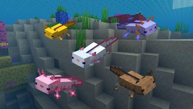 In vielen bunten Farben schimmern die Axolotl im Wasser und warten darauf gefunden zu werden.